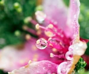 Flower Tears Wallpaper