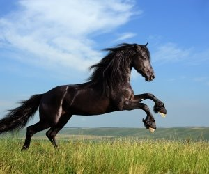 Black Horse Running Wallpaper