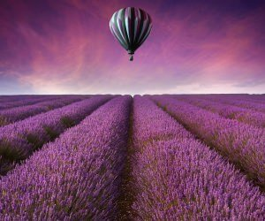 Hot Air Balloon Over Lavender Field Wallpaper