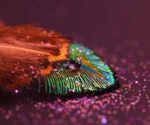 Colorful Feather Wallpaper