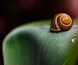 Snail Shell Wallpaper