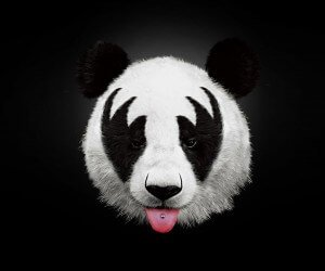 Kiss Panda Wallpaper