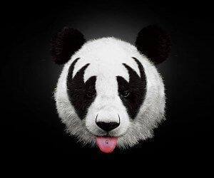 Kiss Panda Wallpaper
