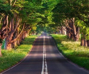 Dorset Road Wallpaper